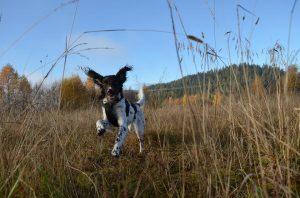 Vardegløtts F-Skadi nyter jaktfrie dager også Foto: Lene Rafaelsen