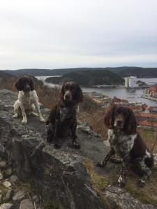 Mascot, Cæsar og Lucky på tur på Fredriksten festning, Halden Foto: Algarheim Bjørg Madsen